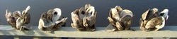 Oyster Shell Center Pieces, Backwater Studio, Mississippi, Folk Art, Coastal, Kathleen Johnson